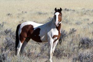 wild-horses5